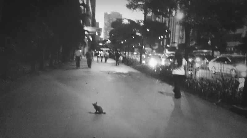 the cat in the big city Ayala Makati City Ayalaavenue Blackandwhite
