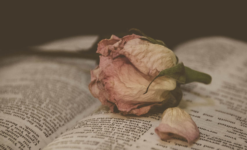 Close-Up Of Dried Rose On Open Book