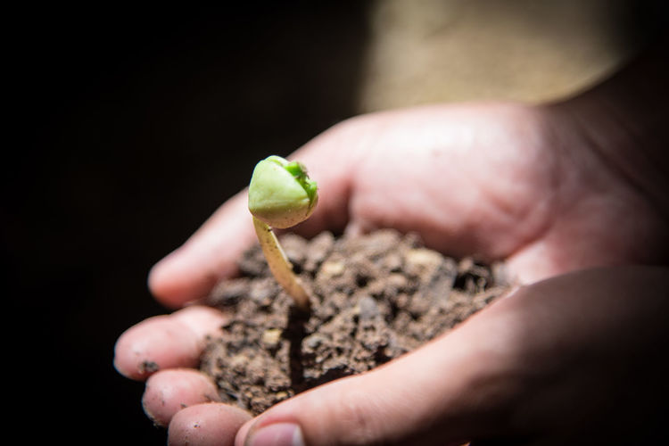 Hands of the men were planting the seedlings into the ground to dry. Green Nature Plant Plant Life Plants 🌱 Tree Trees Concept Conceptual Photography  Gardening Glove Ground Ground Beef Leaf Seedling Soil On The Ground Spring