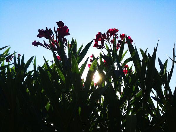Garden Photography Garden Jardin Flower Fleur Flower Garden Sun Sunlight Nature Sky Tree Day Ciel Soleil Beauty In Nature