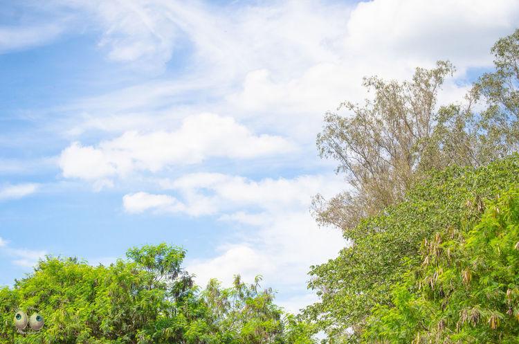 Natural Phtographydocumentary Fotografia Fotografiaéarte Victornatureza Vitaonatureza Olharnatural Photography Nature Natureza Photoart Green Verde Azul Arte