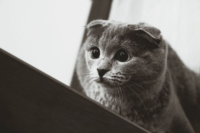 One Animal Looking At Camera Indoors  Animal Head  Animal Themes Portrait Close-up Domestic Animals Animal Nose Looking Animal Hair Focus On Foreground Mammal No People Whisker Snout Pets Cat♡ Cat Eyes Catsagram Cat Lovers Kittycat Kitty Nose Simona Mycat♥