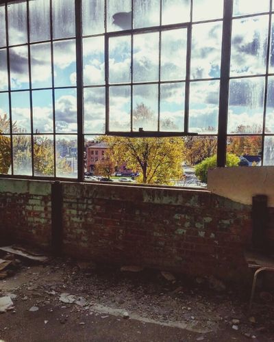 Window Day No People Indoors  Tree Home Interior Architecture Sky Nature Urbanphotography Urban Decay Vintage Photography Abandoned_junkies Abandonment_issues Decay_of_today Urban Exploration Musical Instrument Architecture Abandoned Decaying Building Abandon_seekers Decayed Beauty
