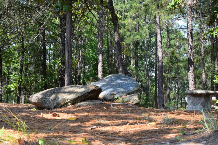Lake Martin Overlook Park...Alabama Alabama Parks Beauty In Nature Forest Landscape Outdoors Park Park - Man Made Space Rock Rock - Object Scenics Tranquility Tree Cherokee Ridge Overlook Cherokee Ridge Hiking Park Lake Martin Lake Martin✌ Alabama Outdoors Hiking Adventures Riding My Motorcycle