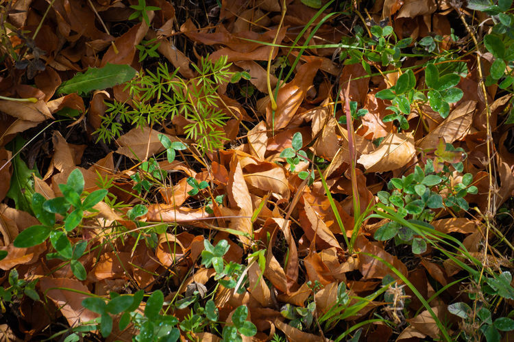 High angle view of dry leaves on field