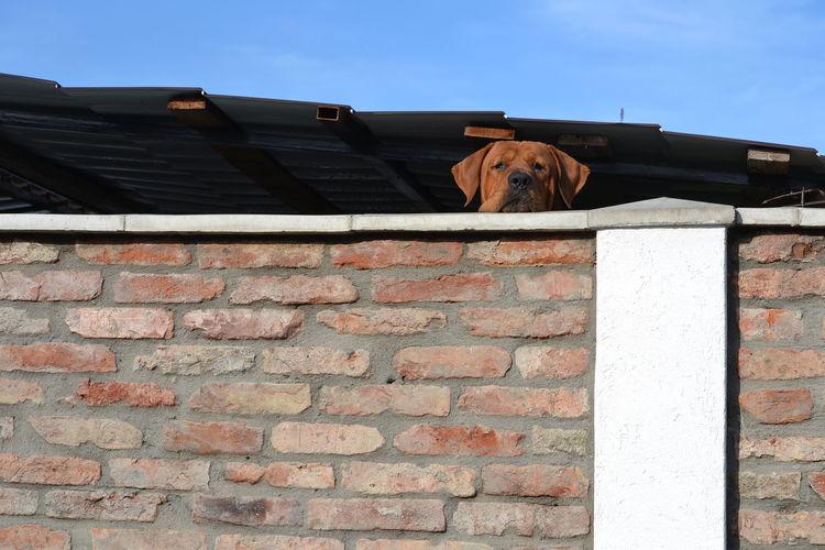 Portrait of a dog on brick wall