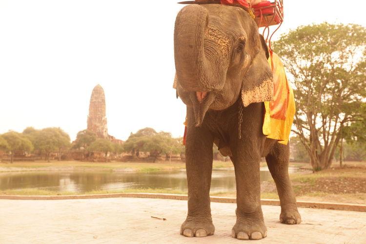 ASIA Ayuthaya Ayutthaya Landmark Ruins Southeastasia Temple Thailand Travel Water