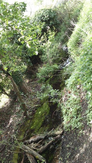 Slanted Tilted Boggy Still Water Bank Brook Spring Time Spring Green Leaves Nature Nature On Your Doorstep Nature_collection Greenery Green Nature Logs Trees Water Stream Beauty In Nature Tree Branches Green Algae Ivy Ivy On Trees Muddy