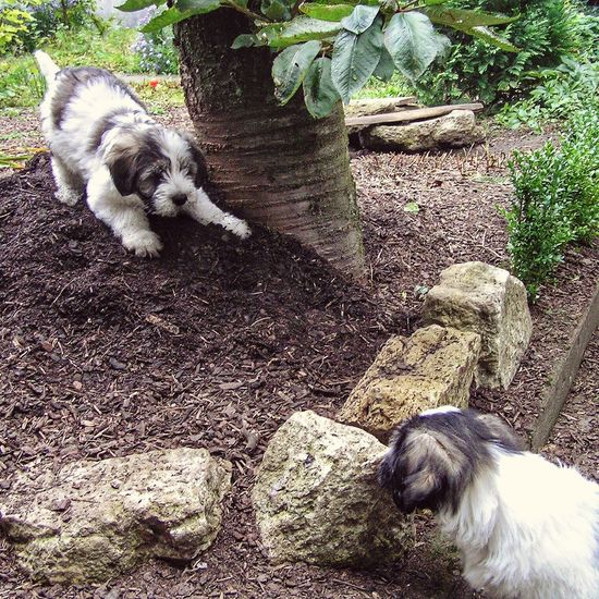 Catch Me If You Can Play With Me Puppy Puppy Love Dogs Dogslife Dog Puppy❤ Garden Two Animals Tension Alertness Showcase March