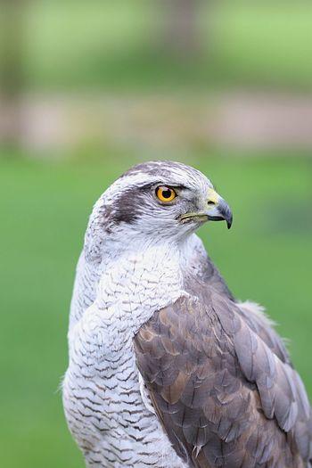 the eye Bird
