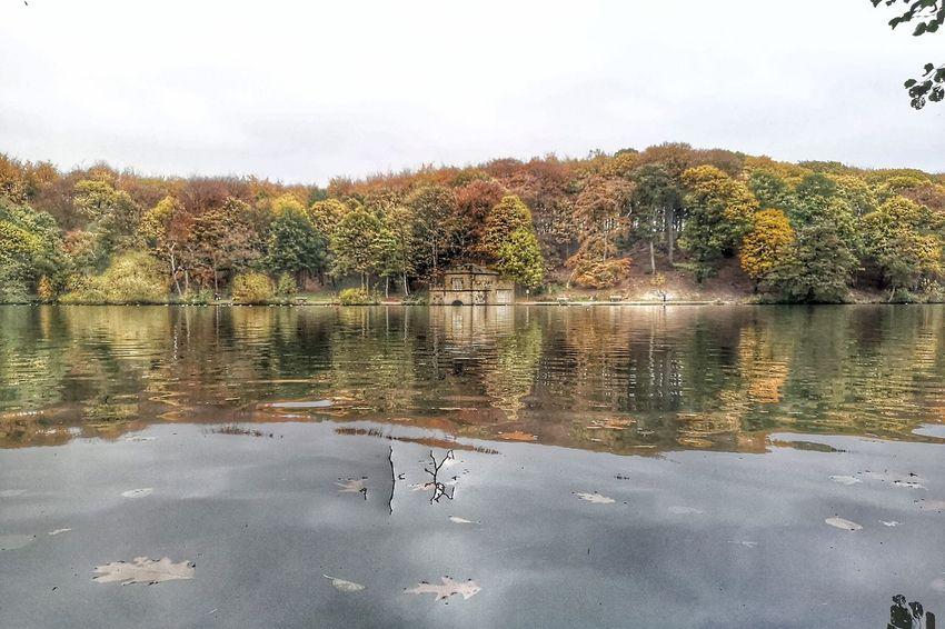 Bird Tree Water Swimming Lake Reflection Sky Animal Themes