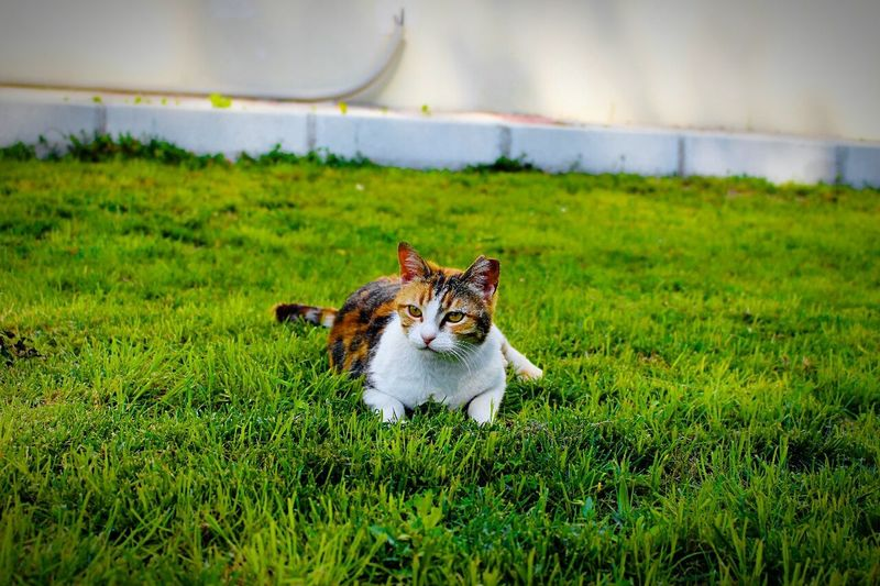 Grass One Animal Nature Outdoors Animal Themes Pets Day Green Color No People Mammal Domestic Animals Water Portrait Sky Canon 700D Izmir 18-55 Mm IS STM Cats 🐱 Cats Of EyeEm Cat Photography Cats