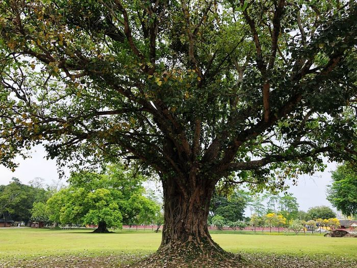 Long life Tree Plant Growth Nature Day Green Color Park No People Tree Trunk Outdoors Beauty In Nature Land Field