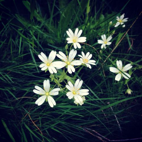 First Eyeem Photo Fleurs Flowers