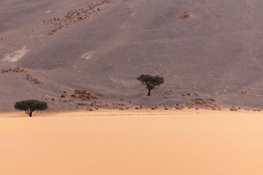 Trees And Desert Desert Desert Tree Geology Landscape Namibia Namibia Desert Namibia Landscape NamibiaPhotography Nature