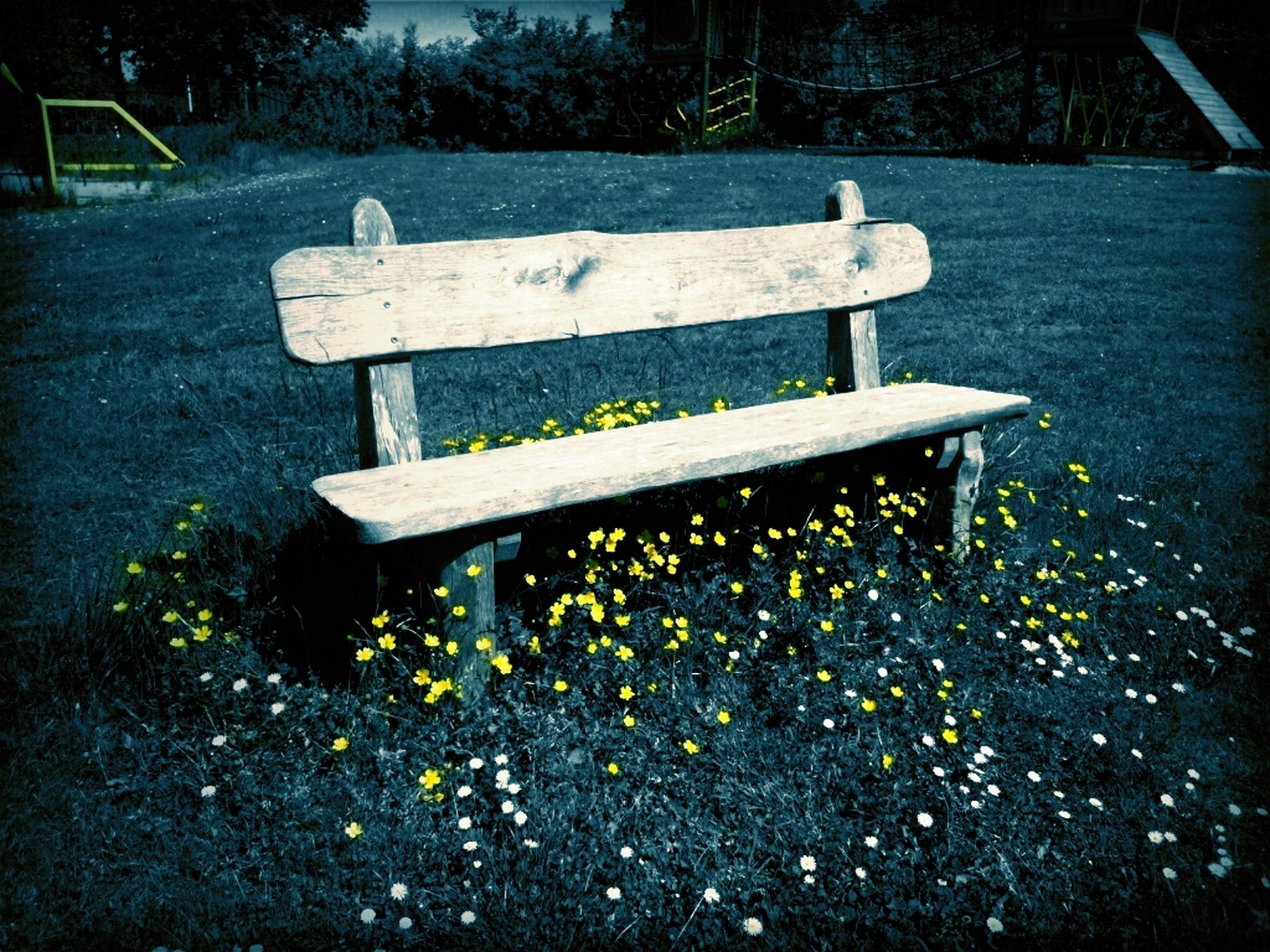 bench, empty, park bench, wood - material, tranquility, park - man made space, absence, grass, wooden, nature, seat, wood, tranquil scene, tree, outdoors, day, no people, park, plant, sunlight