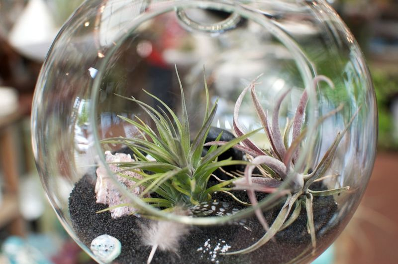 Decorative Plants Freshness Meditation Succulents Clear Your Mind Focus On Foreground Glass - Material Interior Design Mental Health  No People Refreshing Succulent Plant Succulent Plants In Natural Setting Transparent Vulnerability