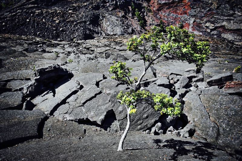 Fighting For Life Green Leaves Hostile Environment Nature Single Tree Struggle For Life Survive Tree