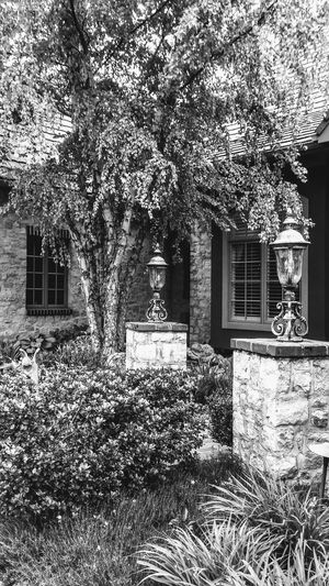Architecture Built Structure Building Exterior Day Door Window Outdoors No People Ivy Tree Growth Plant Nature Irwin Collection EyeEm Gallery Suburbs Beautiful Home Courtyard House Blackandwhite Photography