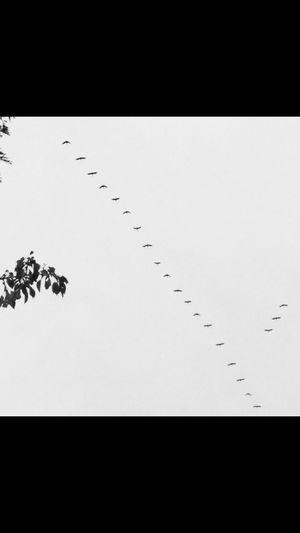A Birds Eye View Blackandwhite Black & White Siyahbeyaz Epsilon Flying Free Throughmyeyes Benimgözümden Benimkadrajim Benimobjektifimden Tranquility Sky Animals In The Wild Wildlife Animal Themes Nature Flock Of Birds Beauty In Nature Migrating Scenics No People Low Angle View