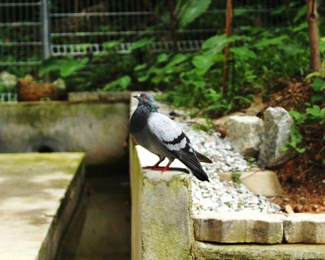 Capturing Freedom 大合照不在手上,只能放一張代表性的照片… 那天去完成神樣的道德任務!!~感謝另一路組帶我們去,謝謝Melissa.:) 感謝,其實我都是去玩的… :) Nature On Your Doorstep Nature Photography Bird Photography