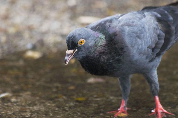 P E C K Bird