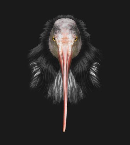 Close-up portrait of bird against black background