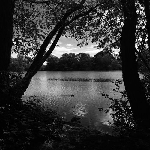 Estate Lake Countryside Country Life Tranquil Monochrome IPhoneography