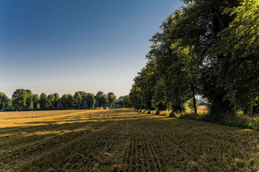 Farmland Morning Bad Segeberg Blue Sky Farmland Landscape_Collection Light And Shadow No People North Germany Schleswig-Holstein Sky Summertime Sunlight And Shadow Trees