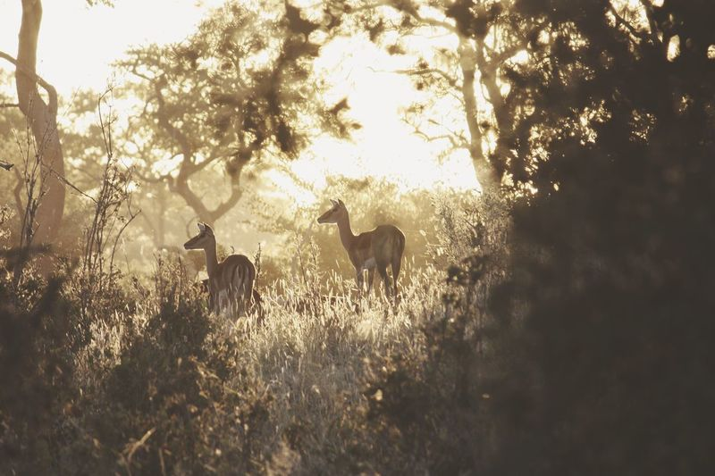 Scenic view deer in forest