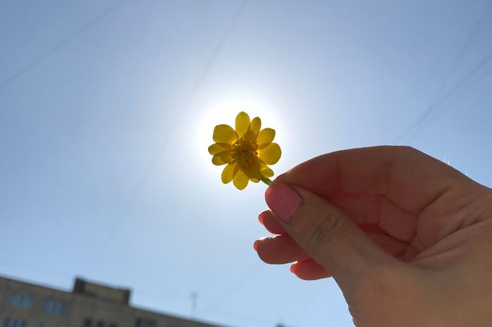 💛💛💛💛💛💛💛 Human Hand Hand Human Body Part One Person Holding Flower Flowering Plant Nature Sky