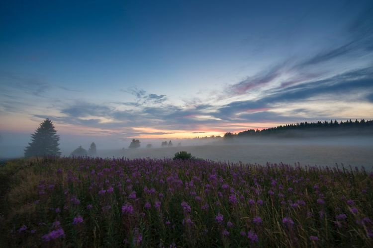 Mist Beauty In Nature Plant Flower Sky Flowering Plant Tranquility Scenics - Nature Nature Field Purple Cloud - Sky Sunset Landscape Outdoors No People