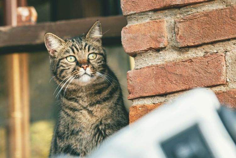 Portrait of a cat against wall