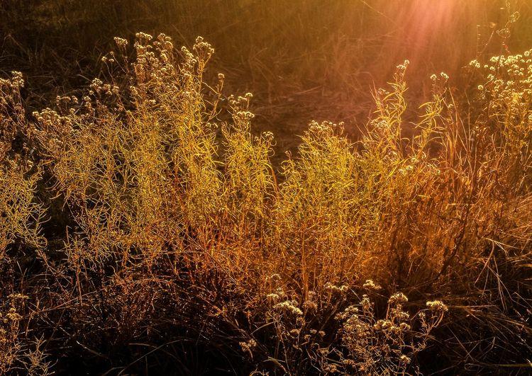 Evening walk. Sunset Dramatic Lighting Fall Colors Beautiful Nature Serene Outdoors
