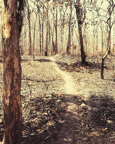 Hutan Jati Badegan Ponorogo