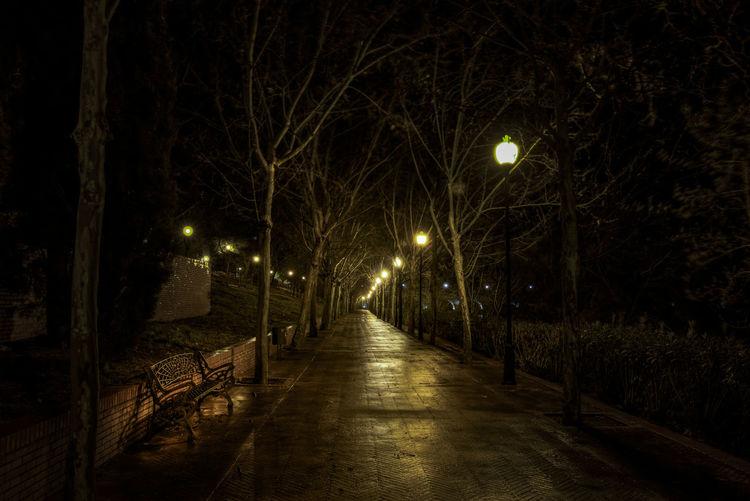 Lonely walk Branch Dark Illuminated Lonely Night No People Trees Walk