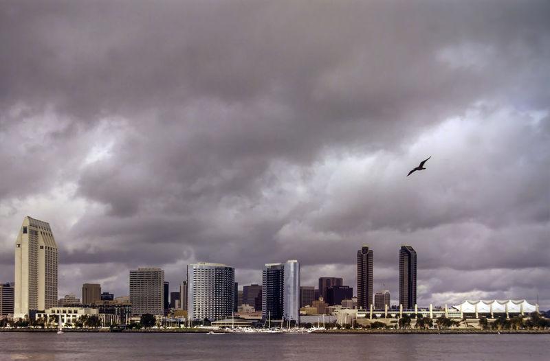 Birds flying over buildings in city