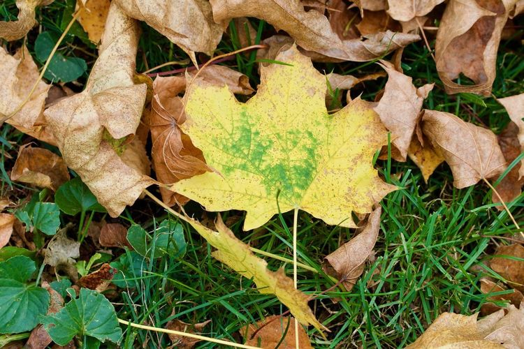Directly above shot of dry leaves on field