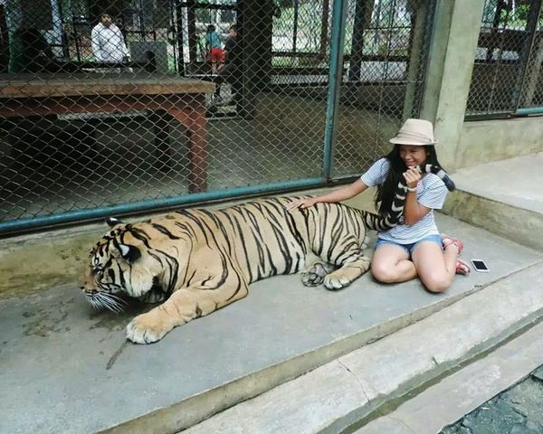 i will eat you! 🐯Big Cat Tiger Lazy Tiger Kingdom Check This Out That's Me Hello World Everyday Joy Havin Fun Young Wild And Free(;