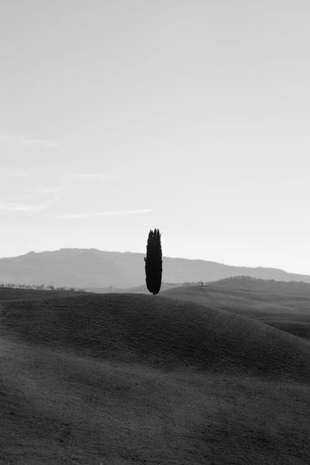 Pienza Pienza (toscana) Paesaggio Crete Senesi Siena Val D'orcia Cypresses Sky Landscape Environment Tranquility Beauty In Nature Tranquil Scene Scenics - Nature Nature Land Plant Copy Space Non-urban Scene Field No People Day Hot Air Balloon Outdoors Growth Tree Clear Sky Arid Climate