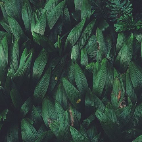 Backgrounds Beauty In Nature Close-up Day Flower Fragility Freshness Full Frame Green Color Growth Leaf Nature No People Outdoors Plant