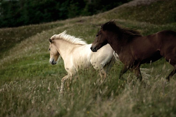 Horses on grass