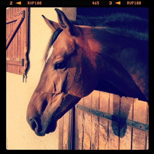 Sanghadestrelles Cheval Ecurie Horses photo lessablons cso concours beau