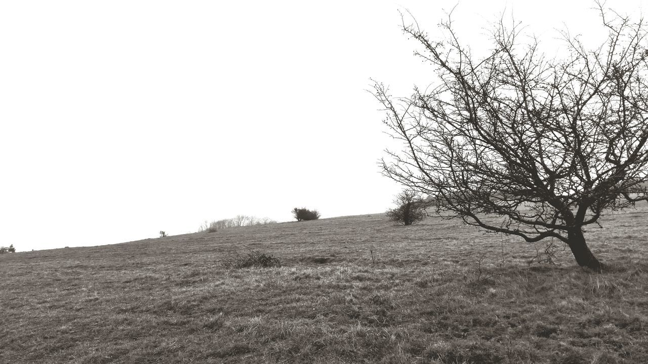 field, landscape, tranquility, nature, clear sky, tree, tranquil scene, beauty in nature, grass, scenics, no people, outdoors, lone, bare tree, day, horizon over land, agriculture, sky