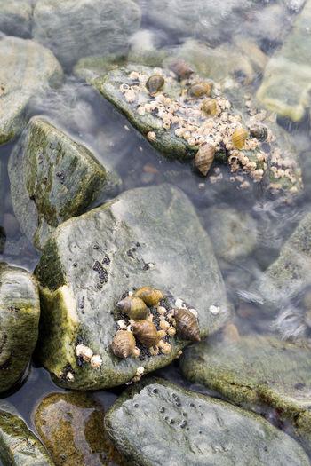 High angle view of shells on rock