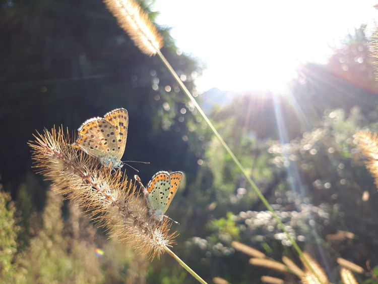 Butterfly - Insect One Animal Animals In The Wild Animal Wildlife Lens Flare Insect Animal Themes