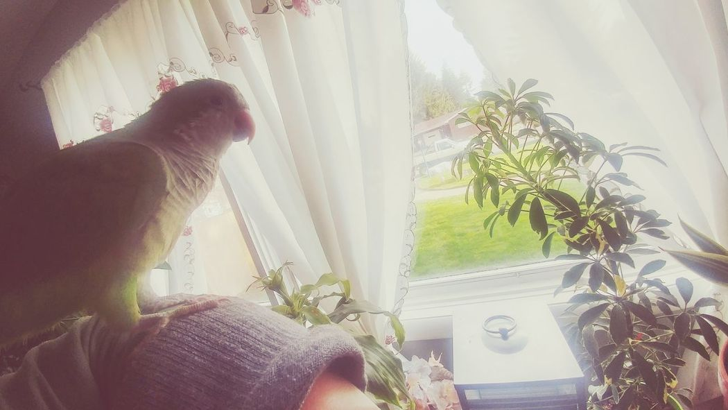 Parrot Quaker Parrot Idahome Window Sunshine Lazy Sunday First Eyeem Photo