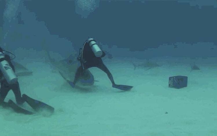 акула море😍 Люди животное Speed гуляем вода видео день Доброе утро:) всем приветик :) встреча Всемудачногодня Diving Flipper One Person Scuba Diving Adults Only Underwater One Man Only People Human Body Part
