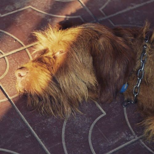My Old Friend <3 Poszke Summer 2014 Nikon nikond3100