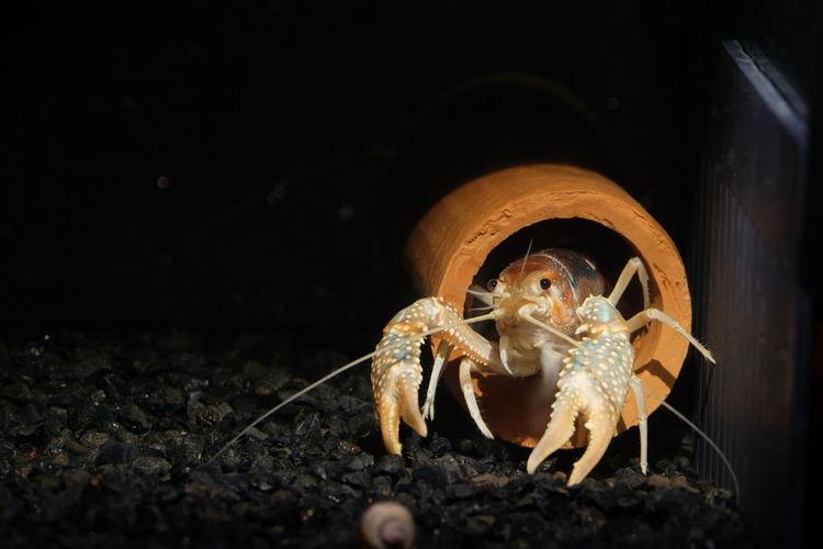 Close-up of hermit crab in aquarium